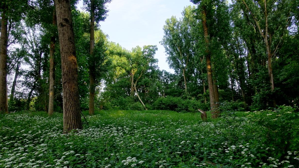 Meadow near Baumberg.JPG