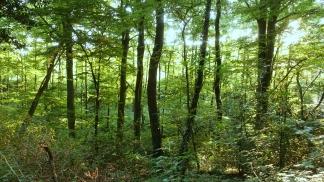 bendy trees in stinderbrook valley