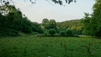meadow with copse of trees stinderbrook valley