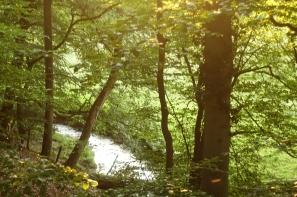trees and stream in milky light stinderbrook valleya