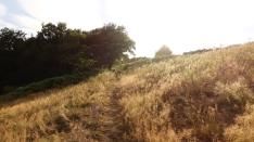 days of heaven style russet fields near in der heide