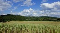 field treeline sky near deilbach
