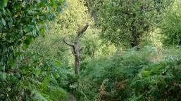 neanderlandsteig trail marker in jungle fern crap