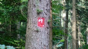 neanderlandsteig trail marker sprayed on pine bark