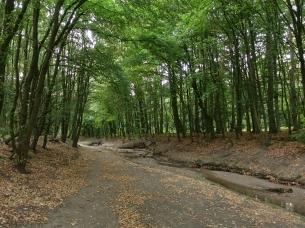 path along the galkhauser bach near garath