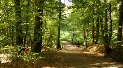 path in dappled sunlight branch near deilbach