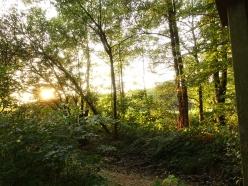 sunset along garath brook