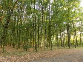 Trees in Hassels