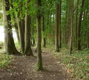 winding path on the neanderderlandsteig near garath